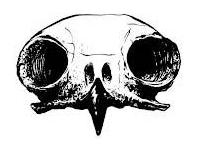 Bones & Feathers